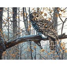 Картина - Мъдра сова, Dimensions PN-0187030, 28 х 36 см